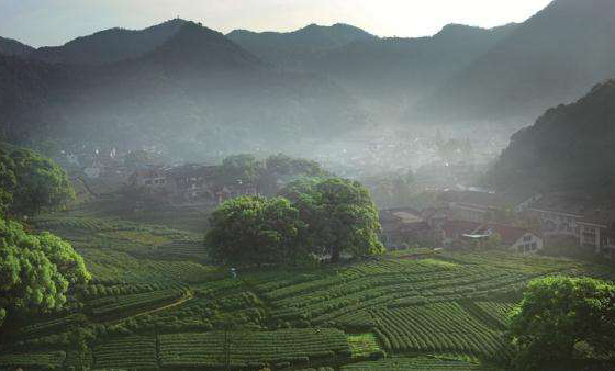 上海租车去杭州旅行感受风景感悟茶道